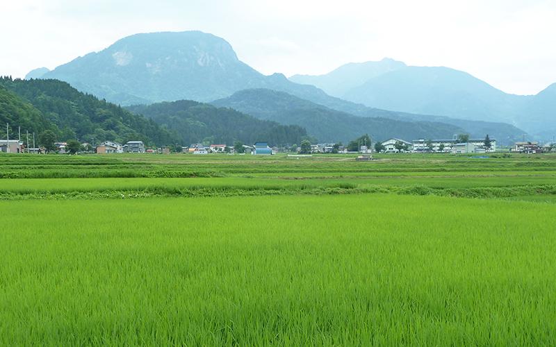 米作りについてり